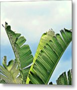 Frayed Palm Fronds Against Blue Sky Metal Print