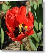Frayed Tulip Metal Print