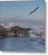 Free As A Bird  Metal Print by Nicole Markmann Nelson