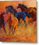 Free Range - Wild Horses Metal Print