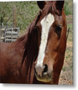 Freedom Horse Metal Print