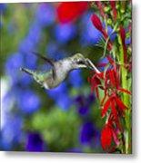 Freedom Hummingbird Metal Print