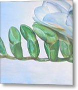 Freesia Metal Print