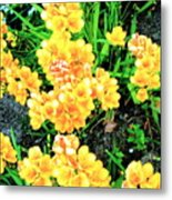 Freesias Metal Print