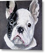 French Bulldog Close Up Metal Print