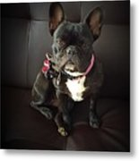 French Bulldog On The Couch Metal Print