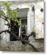 French Cat In Window Metal Print