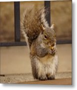 French Fry Eating Squirrel Metal Print