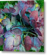 French Hydrangea Rainbow Metal Print