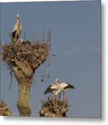 French Storks 01 Metal Print