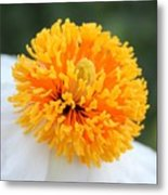 Frenzy Of Stamens Metal Print