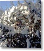 Fresc Snow Metal Print