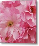 Fresh Blooms Metal Print