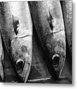 Fresh Catch Metal Print