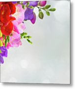 Fresh Freesia Flowers On Blue Metal Print
