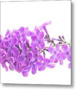 Fresh Lilac Metal Print