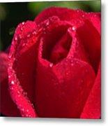 Fresh Rose Metal Print