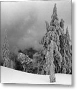Fresh Snow On The Trees Metal Print