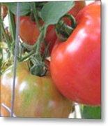Fresh Tomatoes Ahead Metal Print