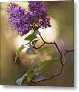 Fresh Violet Lilac Flowers Metal Print