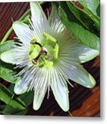 Fresh White Passion Flower  Metal Print