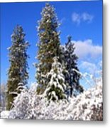 Fresh Winter Solitude Metal Print