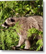 Friday May 20 2016 Metal Print