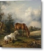Friedrich Gauermann A Grey And A Chestnut In The Pasture  1825 Metal Print