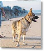 German Shepherd With Man On The Beach Metal Print