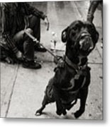 Friendly Dog Metal Print