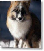 Friendly Fox Metal Print