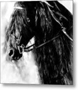 Friesian Horse Beauty Metal Print