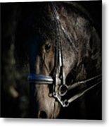 Friesian Horse Portrait Dark Metal Print