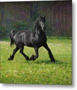 Friesian Power Metal Print