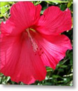 Frilly Red Hibiscus Metal Print