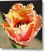 Fringed Tulip Metal Print