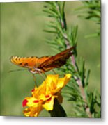 Fritillary Flitterby Metal Print