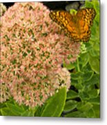 Fritillary On Flower Metal Print