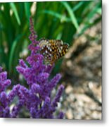 Fritllary Butterfly On Astilbe Metal Print