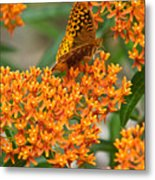 Frittalary Milkweed And Nectar Metal Print