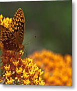 Frittalary On The Prowl Metal Print