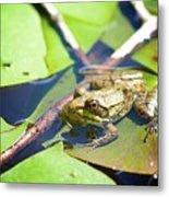 Frog 3 Metal Print