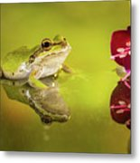 Frog And Fuchsia With Reflections Metal Print