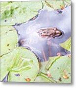 Frog And Lily Pads Metal Print