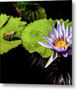 Frog And Lily Reflected Metal Print