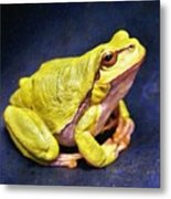 Frog - Id 16236-105000-7516 Metal Print