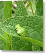 Frog In Comfrey Metal Print