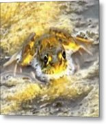 Frog In Deep Water Metal Print