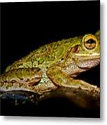 Cuban Tree Frog Metal Print