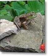 Frog On A Rock Metal Print